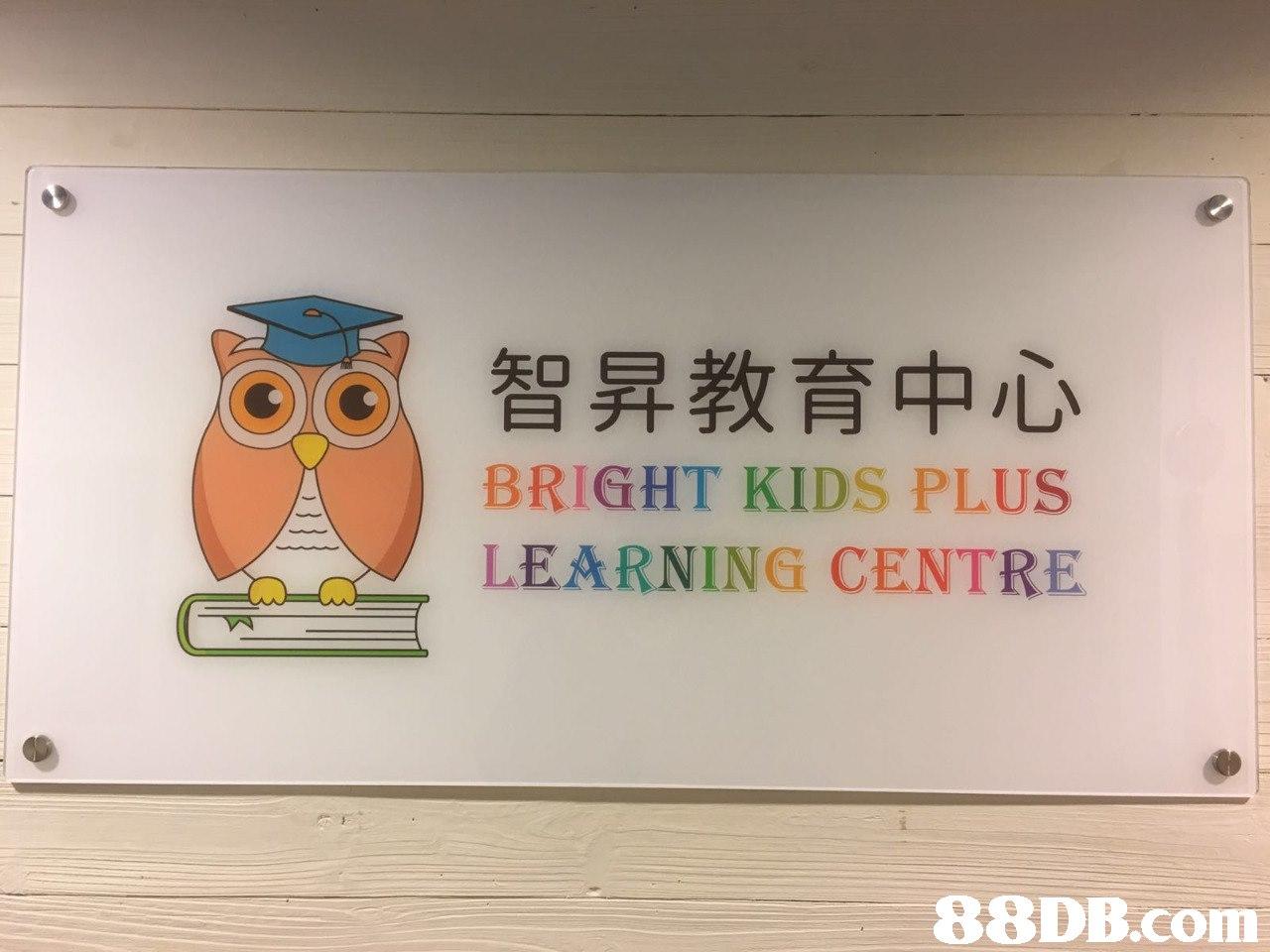 智昇教育中心 BRIGHT KIDS PLUS LEARNING CENTRE   Text,Owl,Bird,Room,