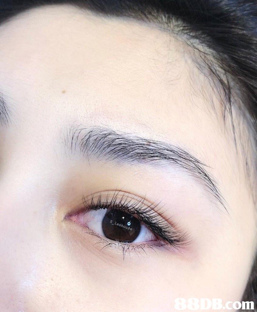 S lashouse  Eyebrow,Face,Eyelash,Eye,Hair