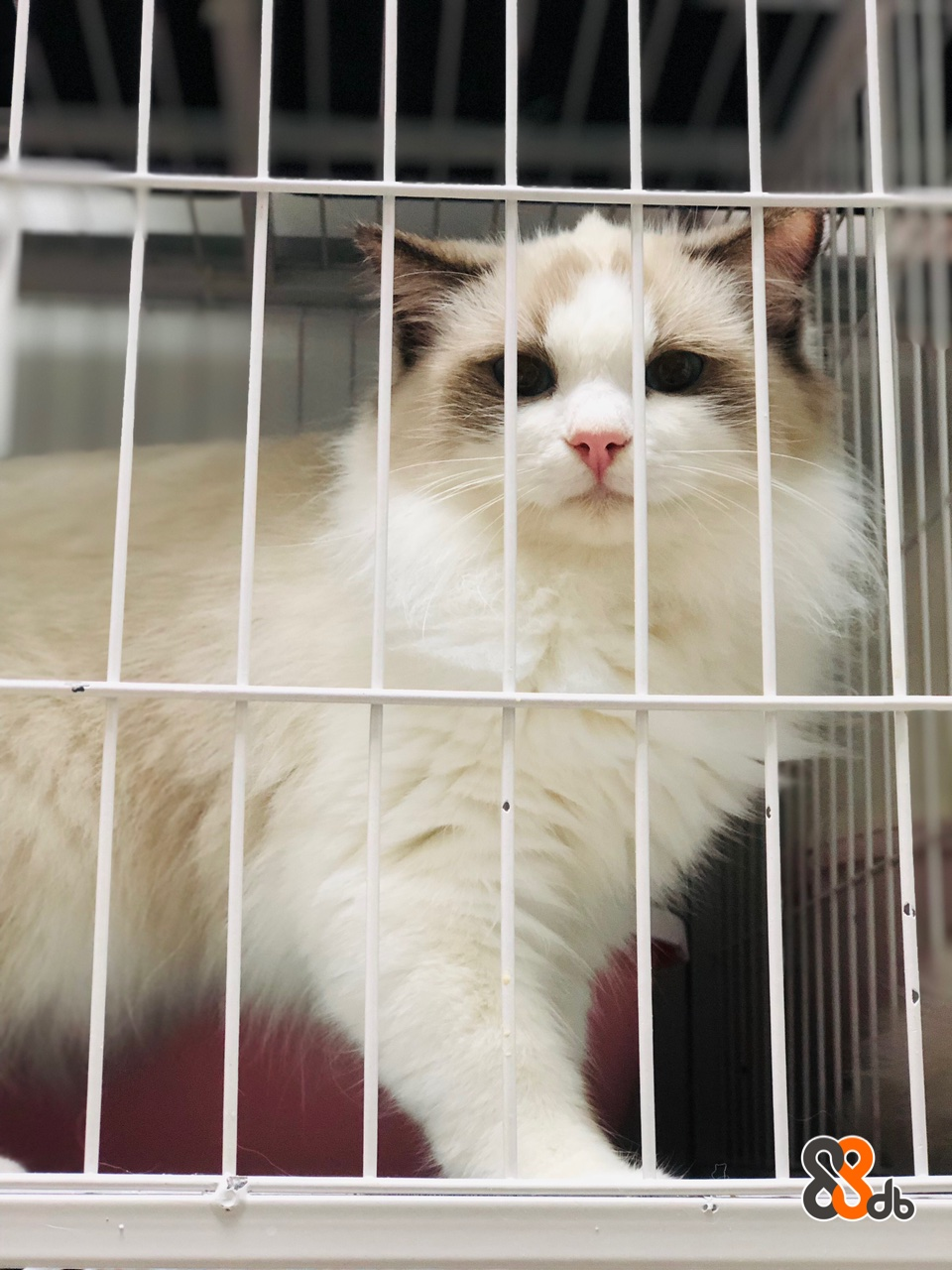 Cat,Mammal,Small to medium-sized cats,Felidae,Animal shelter