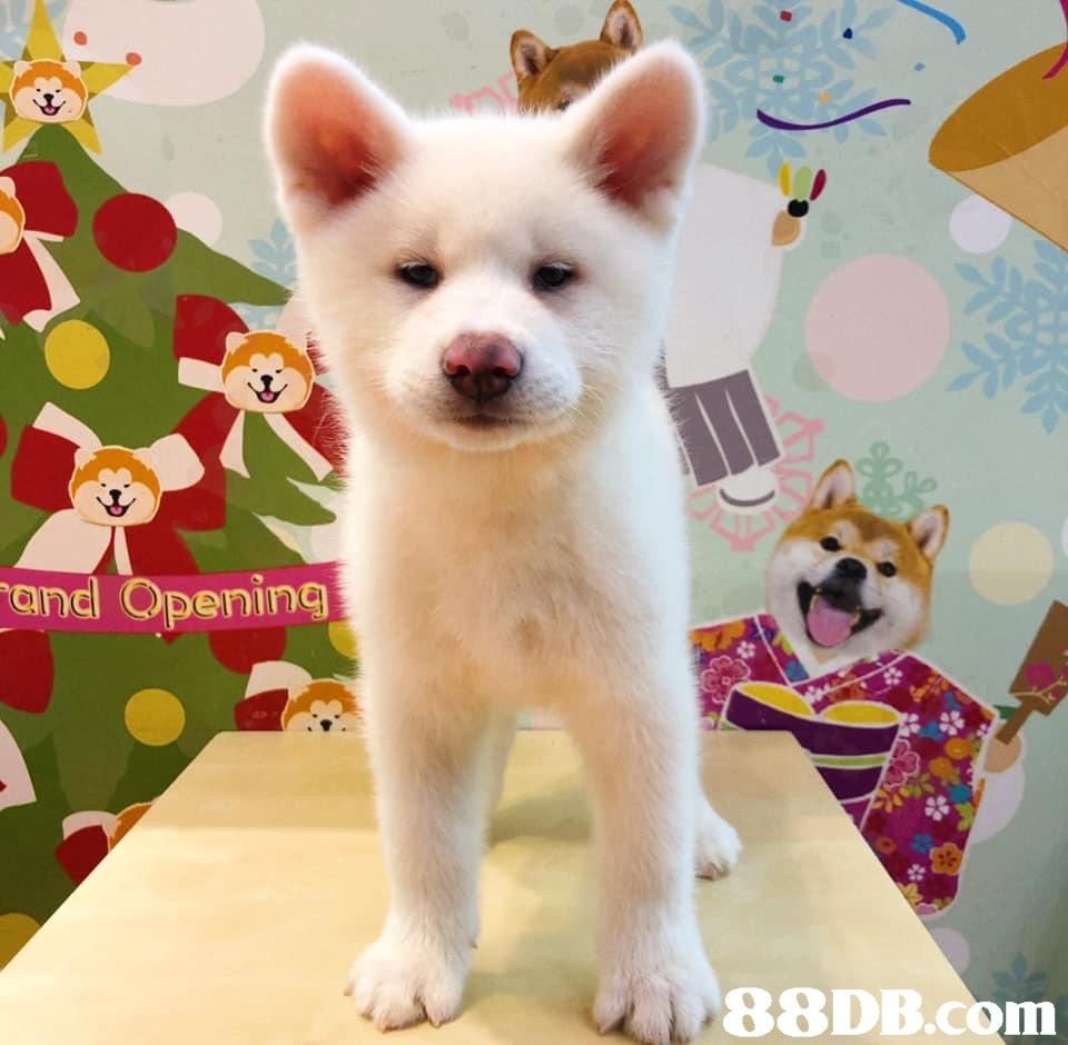 and Opening   Dog,Mammal,Vertebrate,Canidae,Dog breed