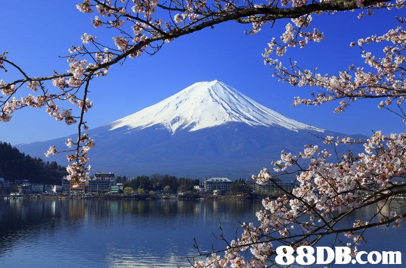 Cherry blossom,Blossom,Flower,Natural landscape,Spring