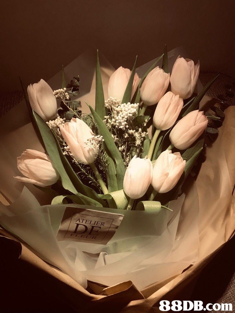 ATELIER m  Flower,Flower Arranging,Floristry,Tulip,Cut flowers
