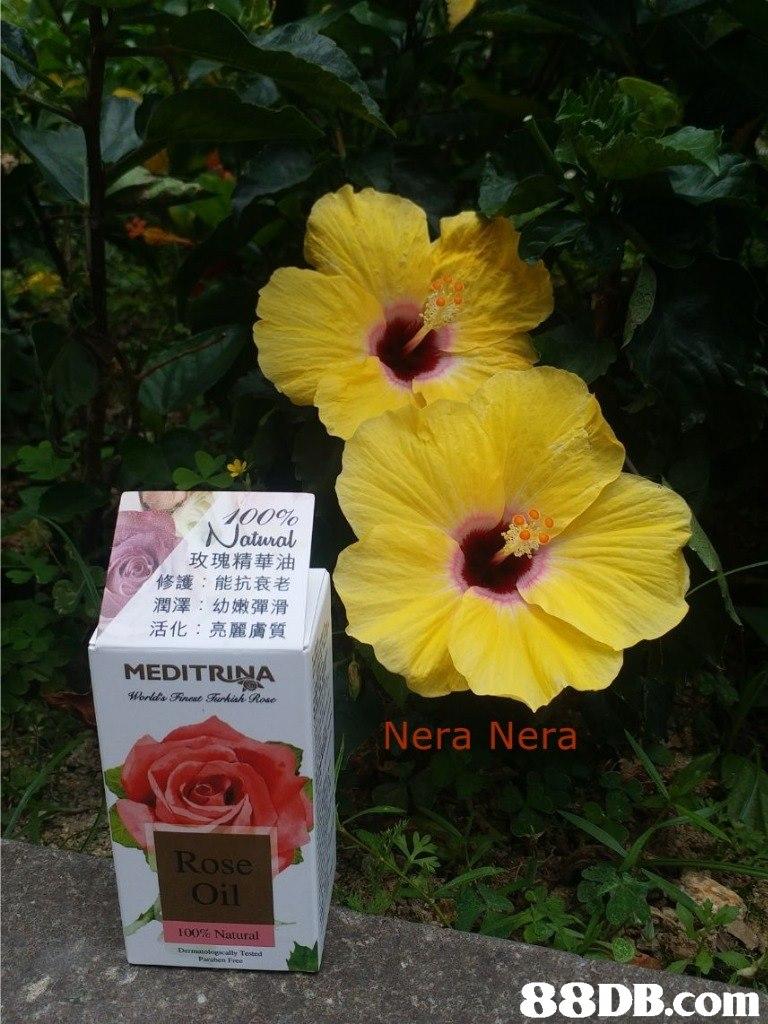 atural 玫瑰精華油 修護:能抗衰老 潤澤:幼嫩彈滑 活化:亮麗膚質 MEDITRINA Nera Nera Rose Oil 100% Natural   Flower,Hibiscus,Chinese hibiscus,Hawaiian hibiscus,Petal