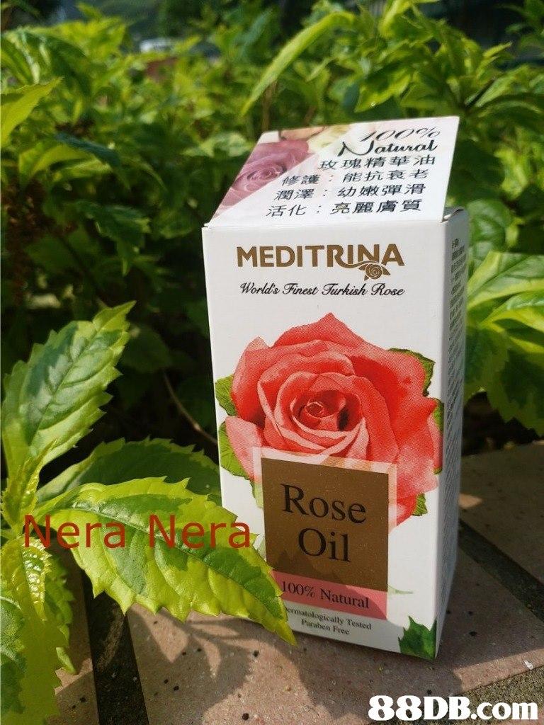玫瑰精華油 修護:能抗衰老 潤澤:幼嫩彈滑 活化:亮麗膚質 MEDITRINA Worlds Finest Turkish Rose Rose Oil 100% Natural matologically Tested Puraben Free   Flower,Plant,Rose,Botany,Flowering plant