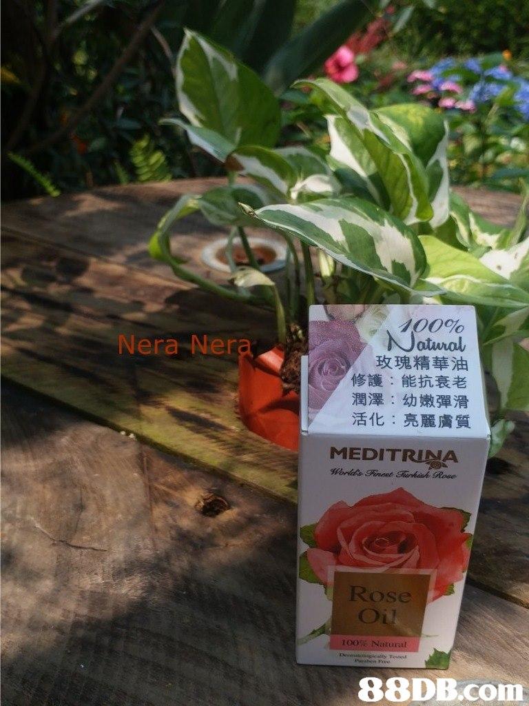 100% atuval 玫瑰精華油 修護:能抗衰老 潤澤:幼嫩彈滑 活化:亮麗膚質 Nera Nera MEDIT Rose Oi 100% Natural   Flower,Plant,Flowering plant,Anthurium,