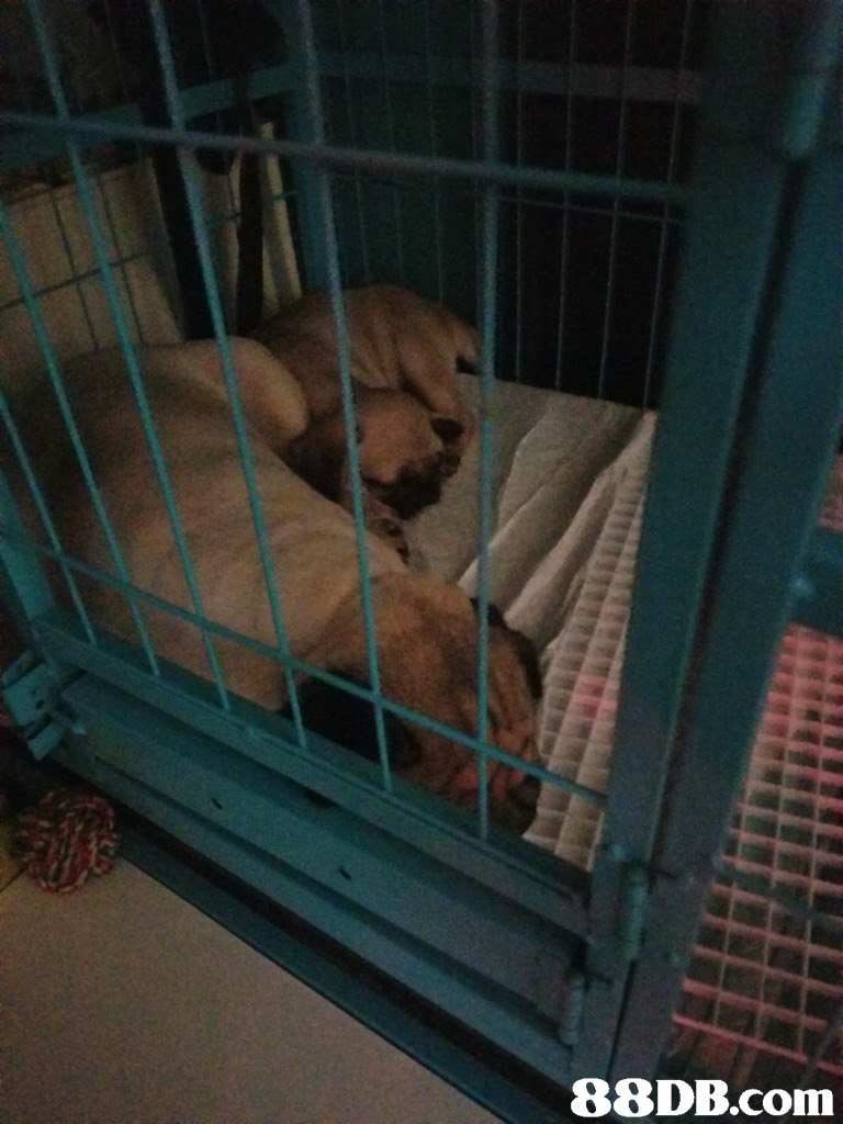 Animal shelter,Canidae,Dog,Cage,Sporting Group