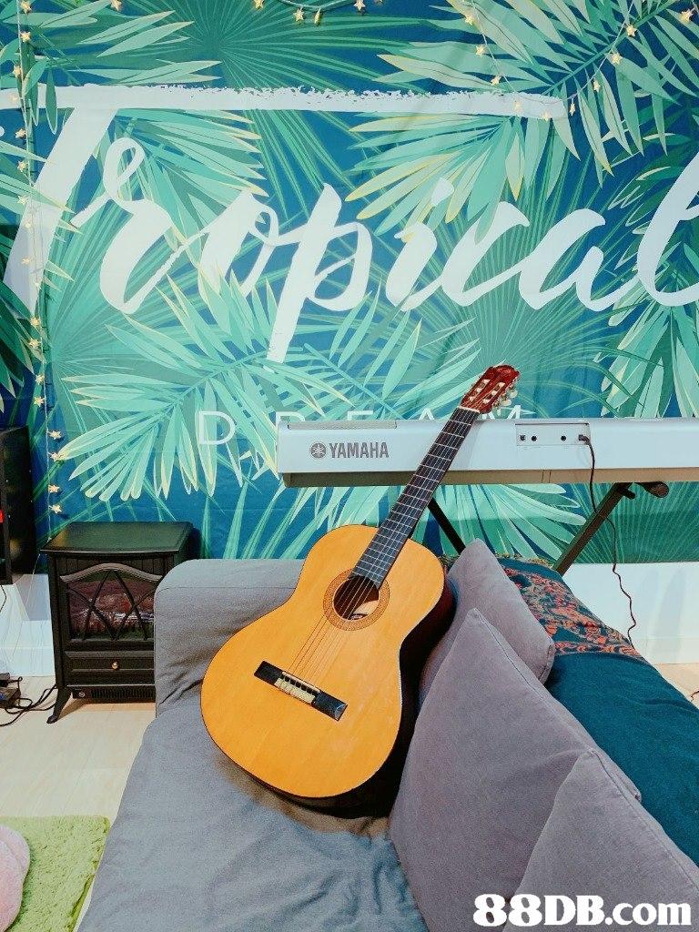 YAMAHA   Guitar,String instrument,Musical instrument,String instrument,Plucked string instruments