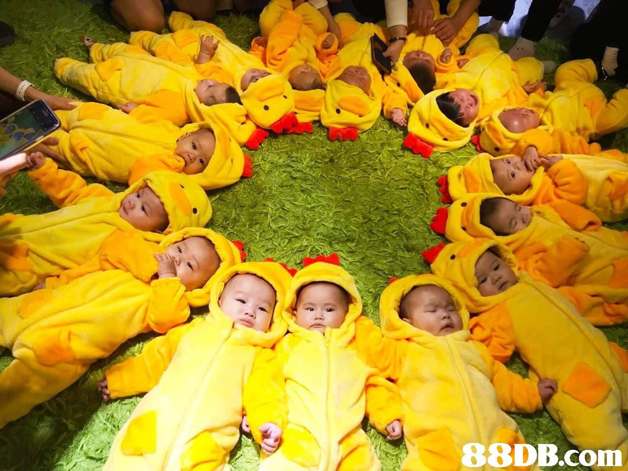 Yellow,Fun,Plant,