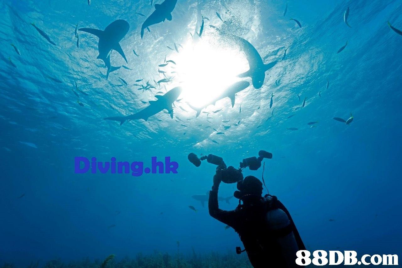 g.hk   Underwater,Scuba diving,Underwater diving,Water,Recreation