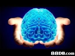 Brain,Brain,Organism,Organ,Water