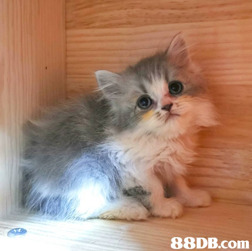 Cat,Mammal,Small to medium-sized cats,Felidae,Whiskers