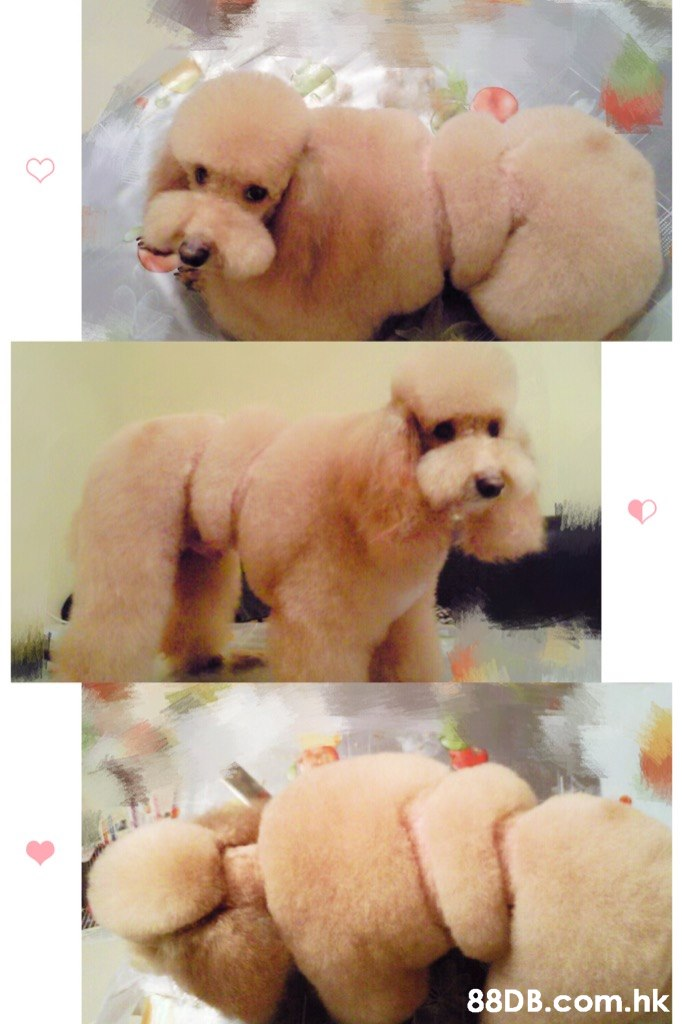 .hk  Stuffed toy,Canidae,Dog,Dog breed,Plush