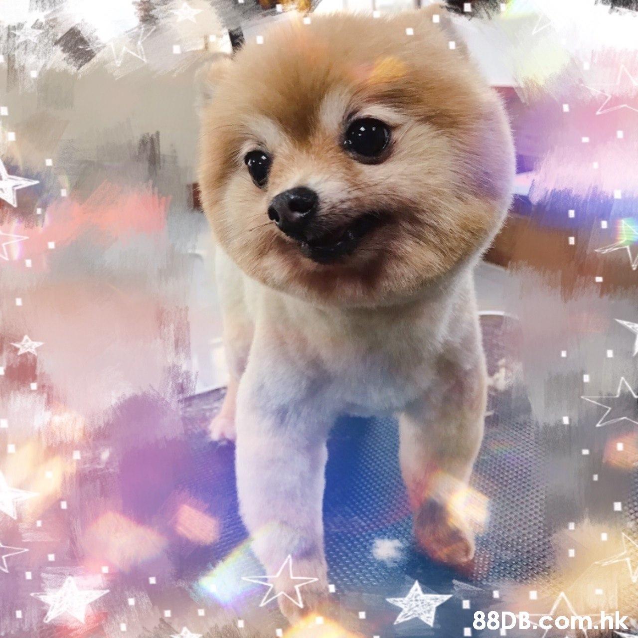 88pB.com.hk  Dog,Mammal,Vertebrate,Canidae,Puppy