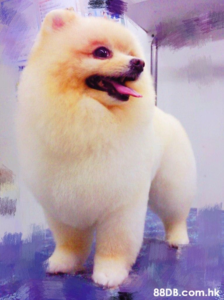 .hk  Mammal,Dog,Vertebrate,Canidae,Dog breed