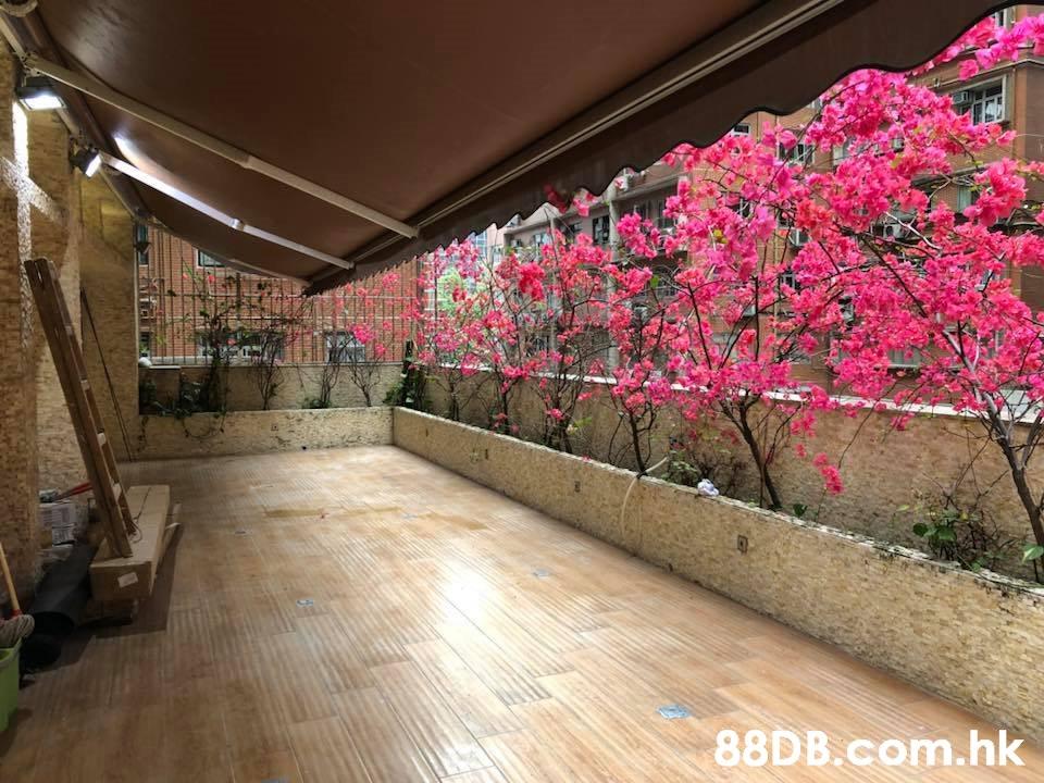 .hk  Flower,Pink,Plant,Tree,Spring