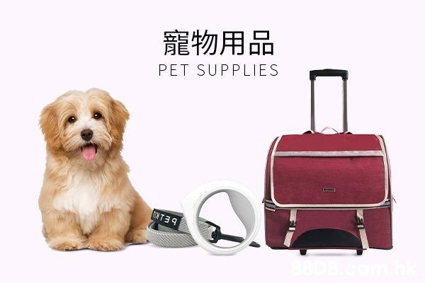 寵物用品 月 PET SUPPLIES  Suitcase,Canidae,Dog,Dog breed,Leash