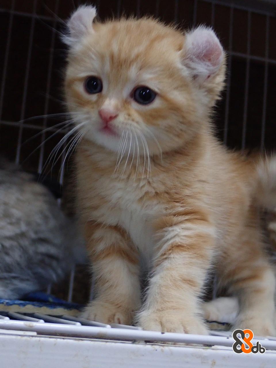 Cat,Small to medium-sized cats,Mammal,Felidae,Whiskers