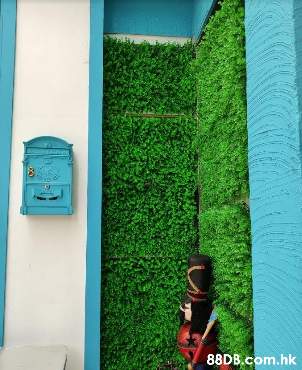 .hk  Green,Wall,Turquoise,Grass,Plant