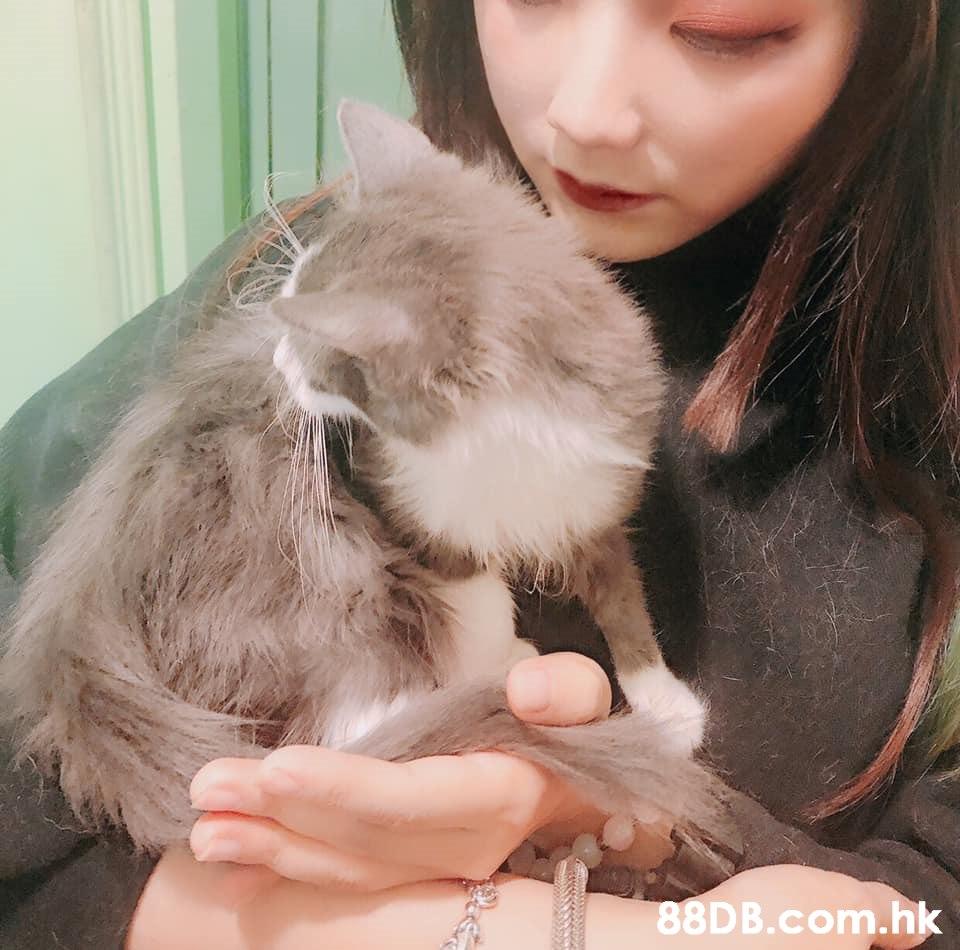 .h  Cat,Felidae,Skin,Fur,Small to medium-sized cats