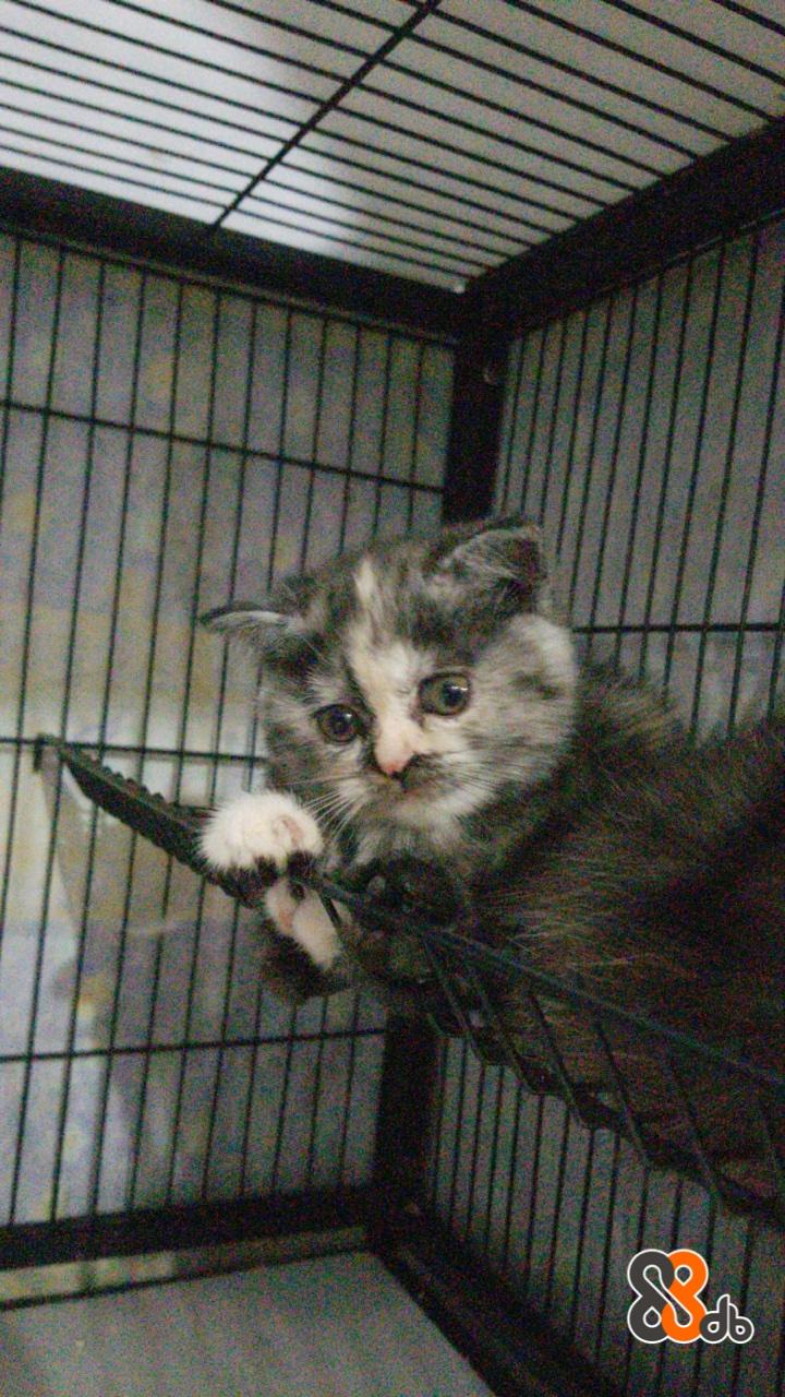 Cat,Vertebrate,Mammal,Small to medium-sized cats,Felidae