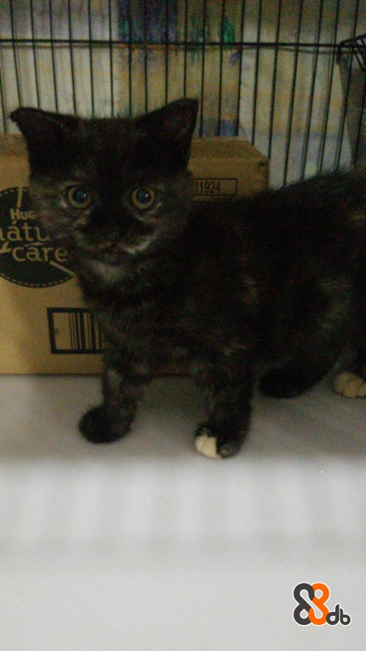 1924 HuG atu care  Cat,Mammal,Vertebrate,Small to medium-sized cats,Felidae