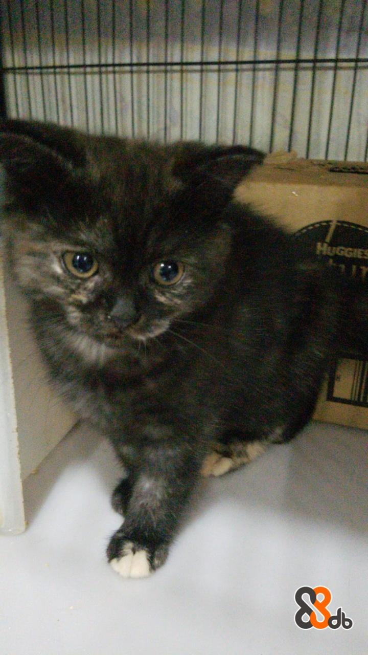HUGGIES  Cat,Mammal,Vertebrate,Small to medium-sized cats,Felidae