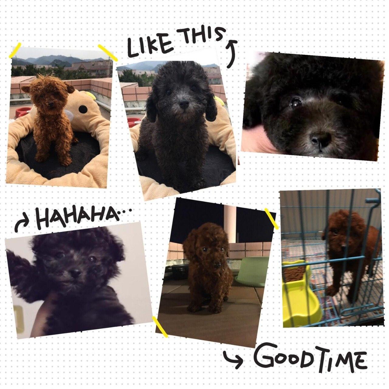 LIkE THis HAHAHA よ! GooDTiME  Dog,Vertebrate,Mammal,Canidae,Dog breed