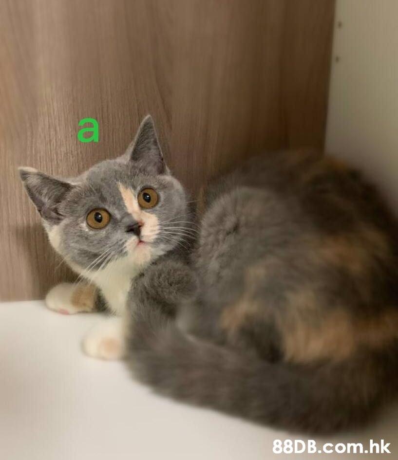 ya .hk  Cat,Mammal,Vertebrate,Small to medium-sized cats,Felidae