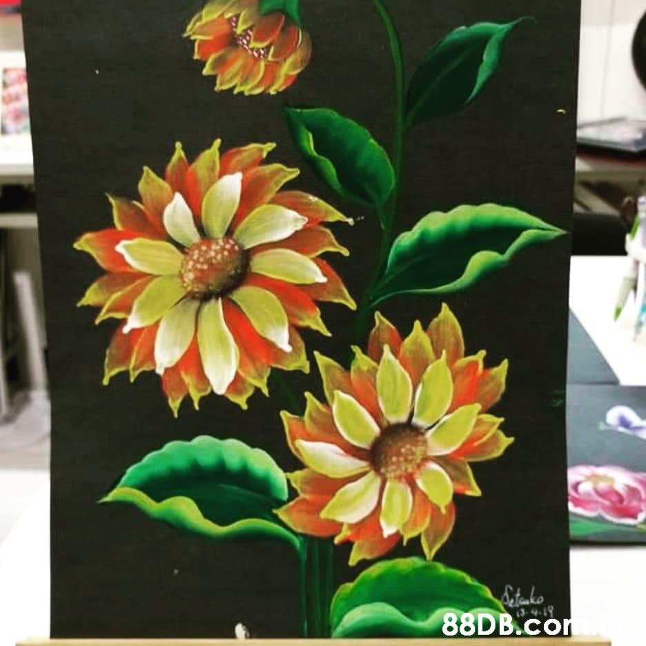Catoako 88DB.co 4-19  Flower,Plant,Leaf,Petal,Yellow