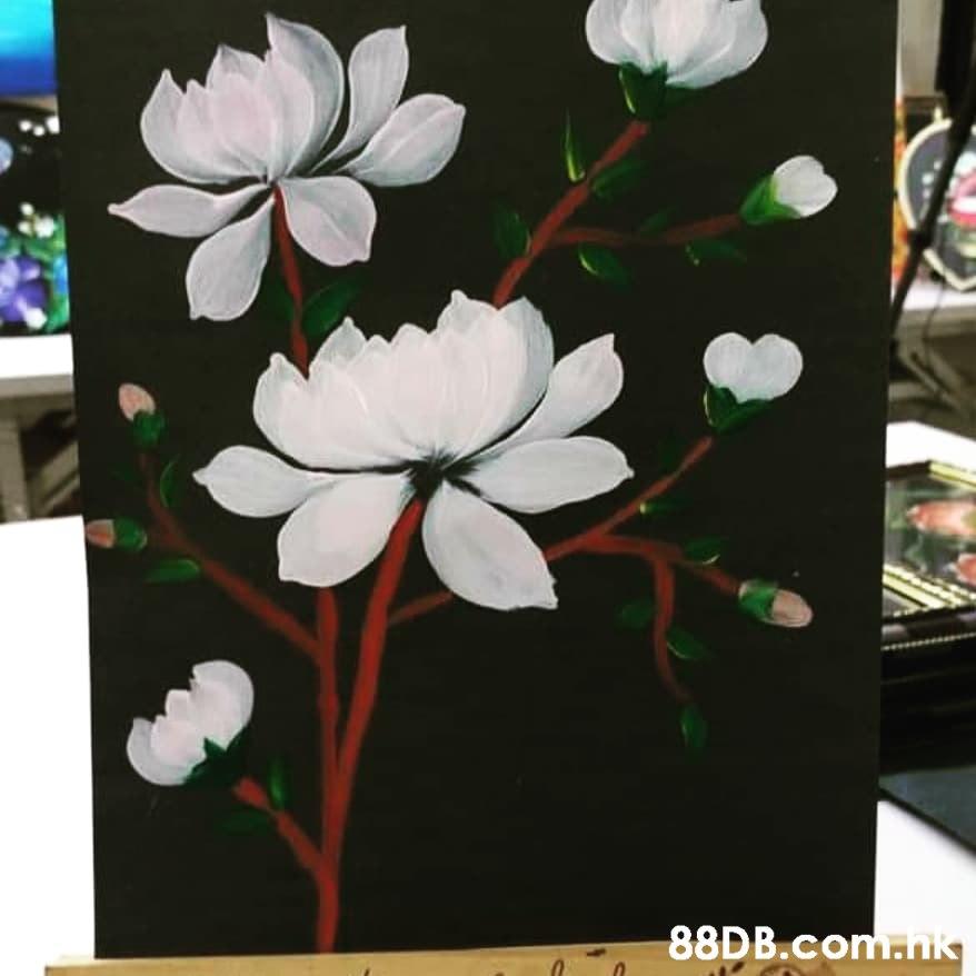 .nik  Petal,Flower,Plant,Botany,Flowering plant