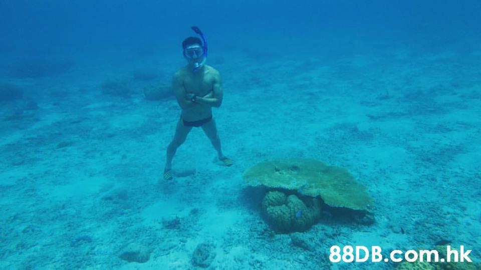 .hk  Green sea turtle,Turtle,Sea turtle,Hawksbill sea turtle,Underwater