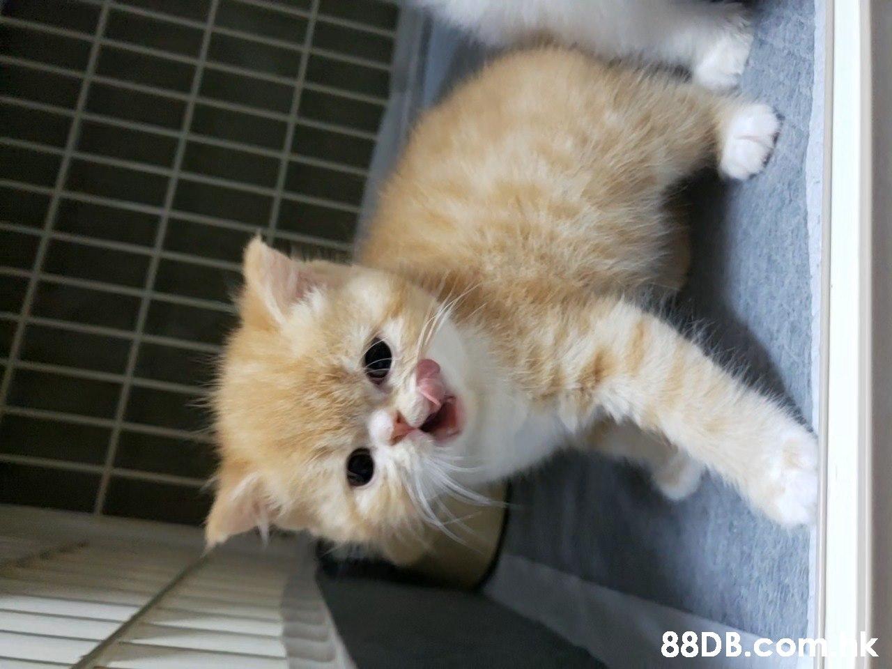 k  Cat,Mammal,Vertebrate,Small to medium-sized cats,Felidae