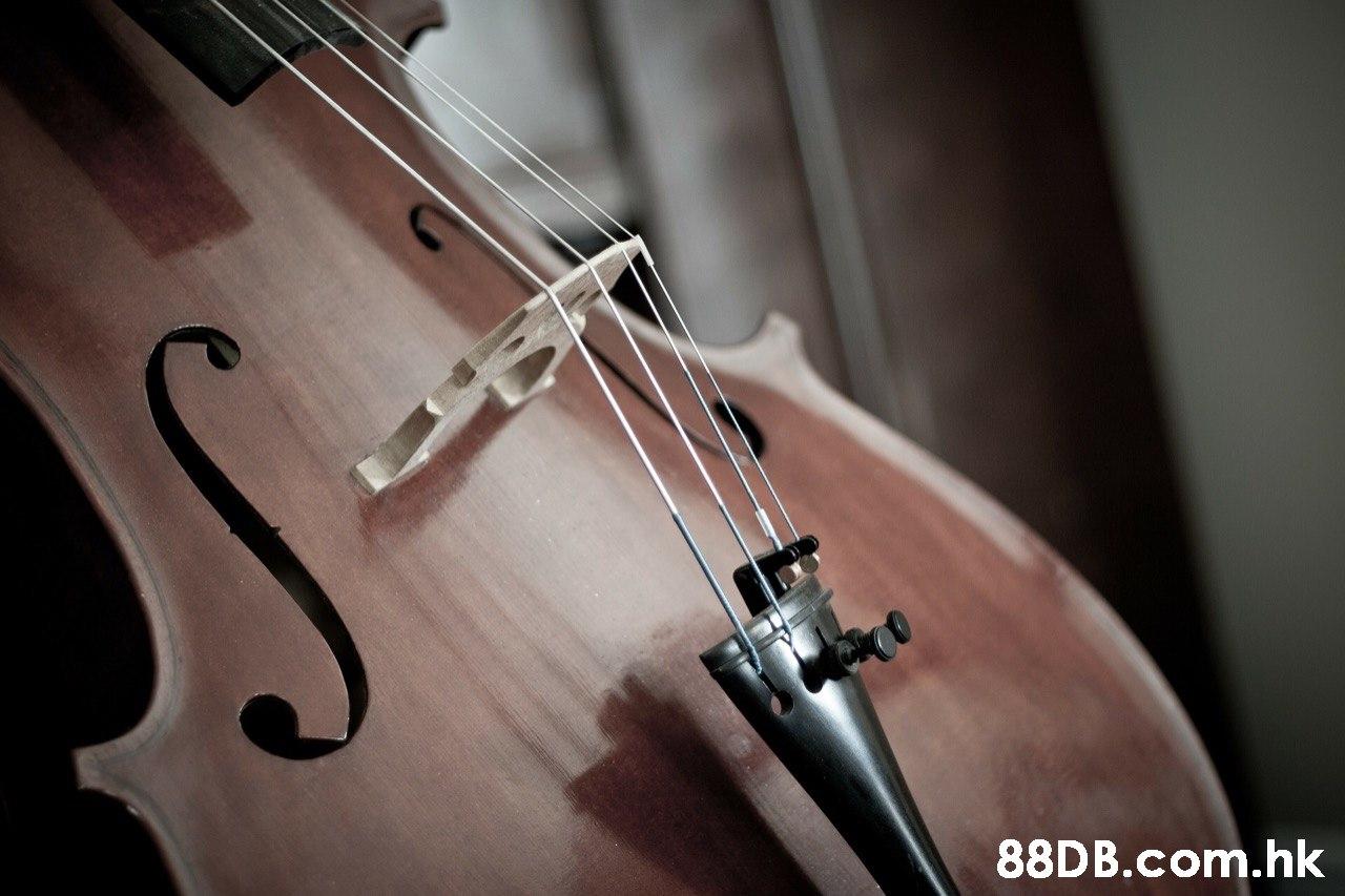 .hk  String instrument,String instrument,Violin,Violin family,Bowed string instrument