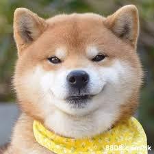 88DB comk  Dog,Mammal,Vertebrate,Dog breed,Canidae