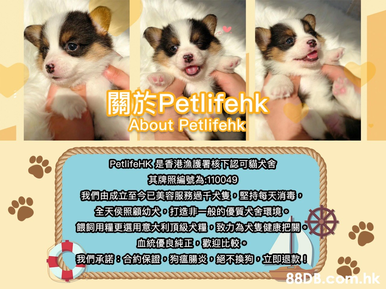 關於Petlifehk About Petlifehk PetlifeHK是香港漁護署核下認可貓犬舍 其牌照編號為110049 我們由成立至已美容服務過大隻。堅持每天消毒。 全天侯照顧幼大打造非一般的優質犬舍環境。 餵飼用糧更選用意大利頂級犬糧。致力為犬隻健康把關。 血統優良純正。歡迎比較。 我們承諾8合約保證。狗瘟腸炎。絕不換狗0立即退款 .hk  Canidae,Dog,Puppy,Dog breed,Carnivore