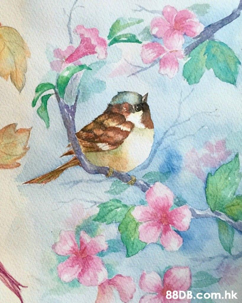 .hk  Watercolor paint,Bird,Branch,Illustration,House sparrow