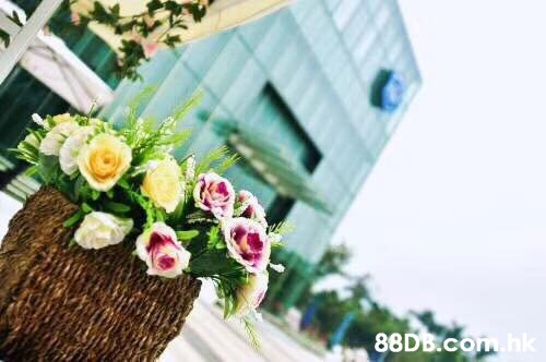 .hk  Flower,Bouquet,Flower Arranging,Pink,Plant