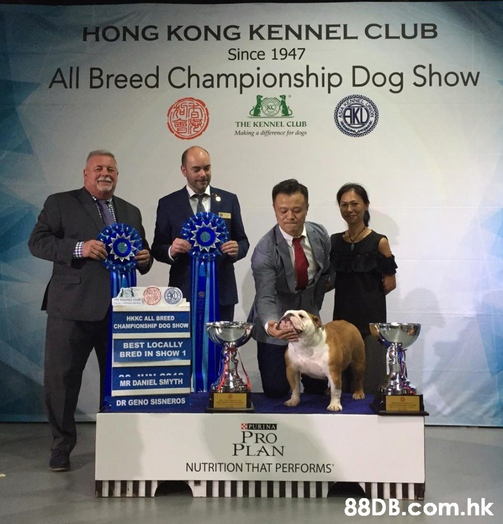 HONG KONG KENNEL CLUB Since 1947 All Breed Championship Dog Show NNET EL UN AKO THE KENNEL CLUB Making a difference for dogs wsIN HKKC ALL BREED CHAMPIONSHIP DOG SHOW eu BEST LOCALLY BRED IN SHOW 1 MR DANIEL SMYTH DR GENO SISNEROS PURINA PRO PLAN NUTRITION THAT PERFORMS 88DB.Com.hk  Dog,Canidae,Carnivore,Kennel club,