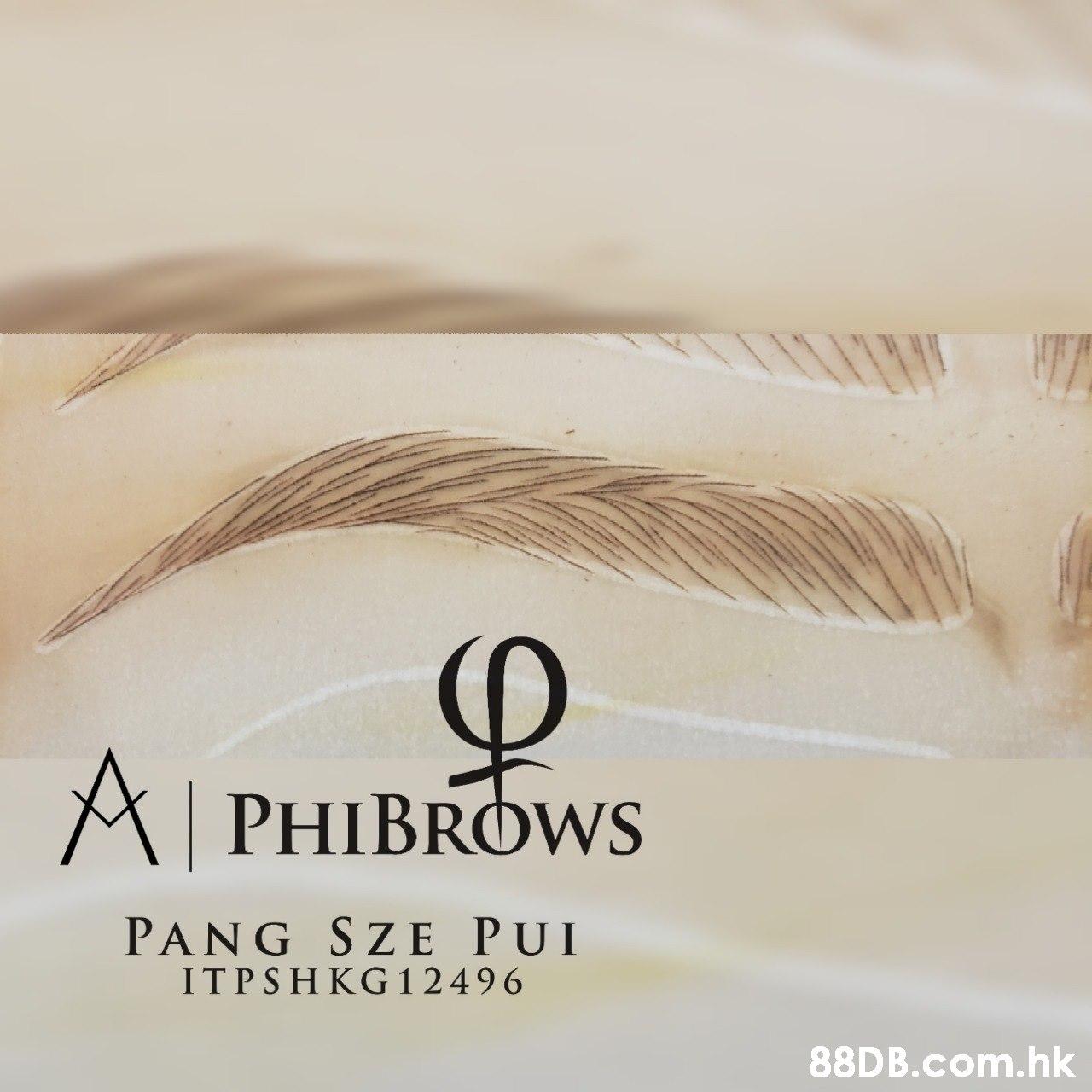 APHIBROWS PANG SZE PUI ITPSHKG 12496 .hk  Text,Eyebrow,Font,Eyelash,Beige