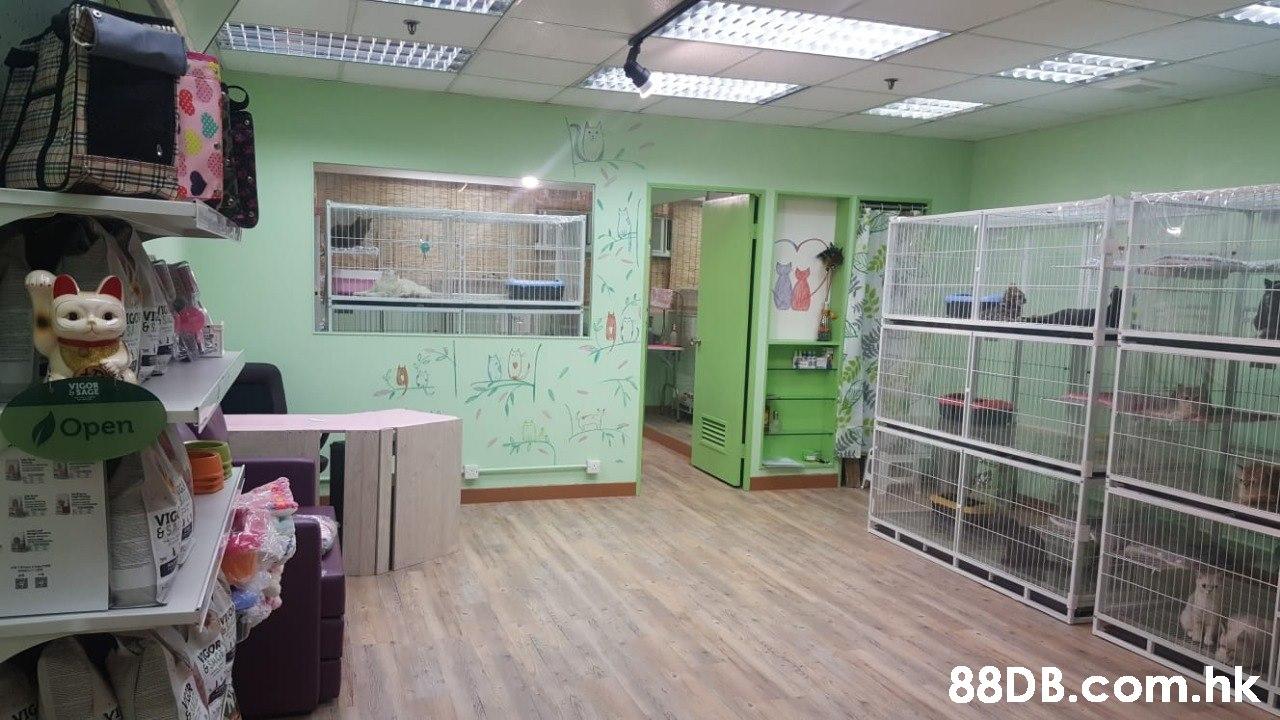 Open VIG VIGOR .hk  Property,Room,Building,Real estate,Interior design