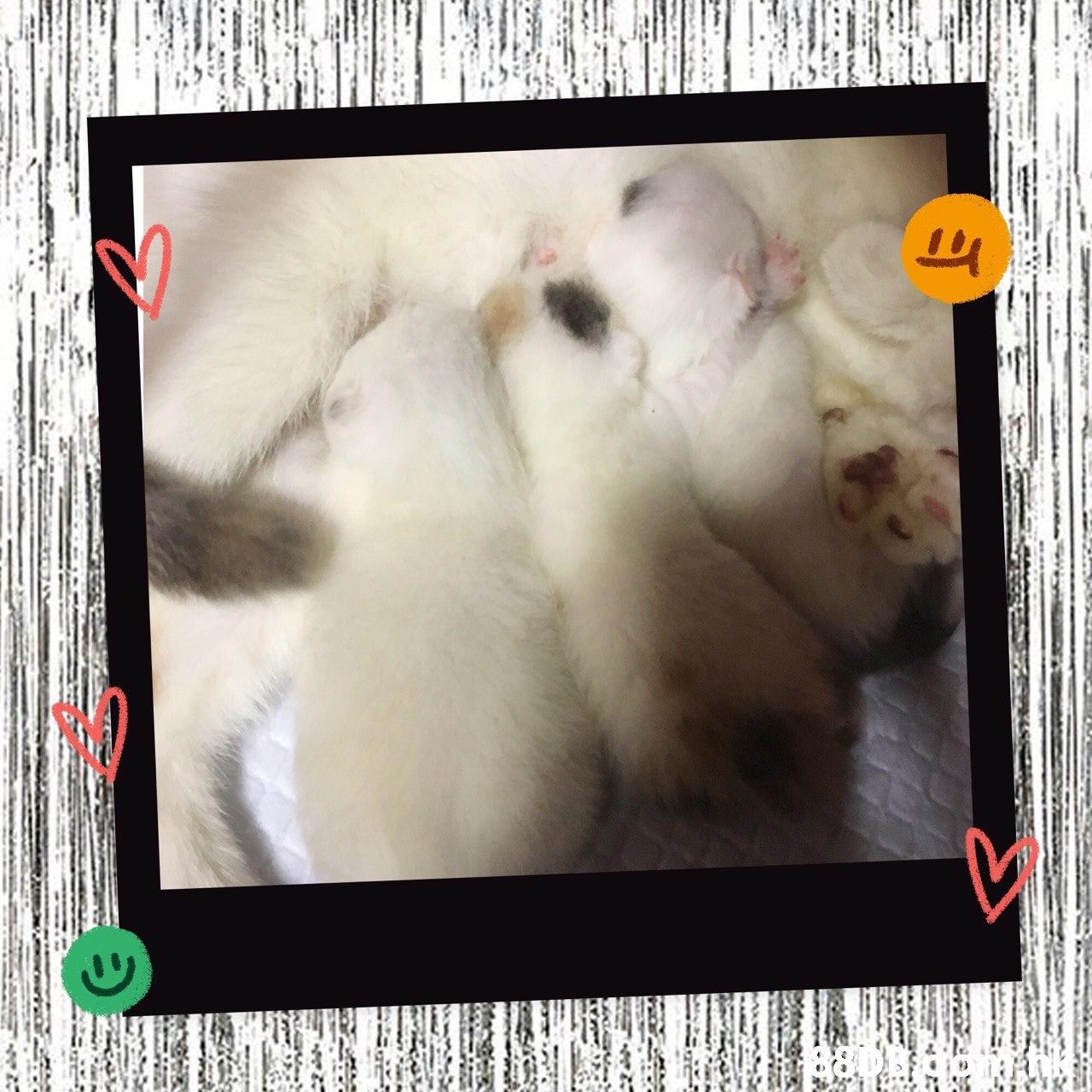 880B  Cat,Felidae,Fur,Paw,Picture frame