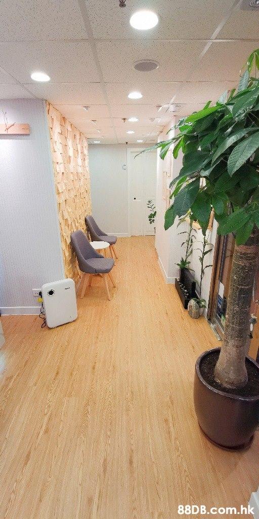 .hk  Floor,Room,Flooring,Property,Houseplant