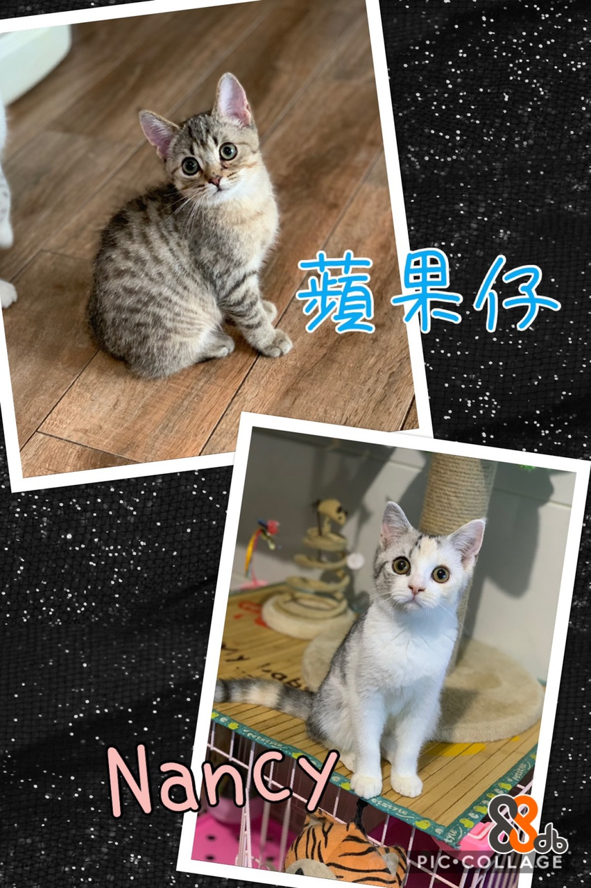 ab Naney PIC COLLAGE N  Cat,Mammal,Small to medium-sized cats,Felidae,Whiskers
