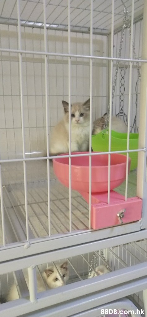.hk  Cage,Cat,Animal shelter,Felidae,Small to medium-sized cats