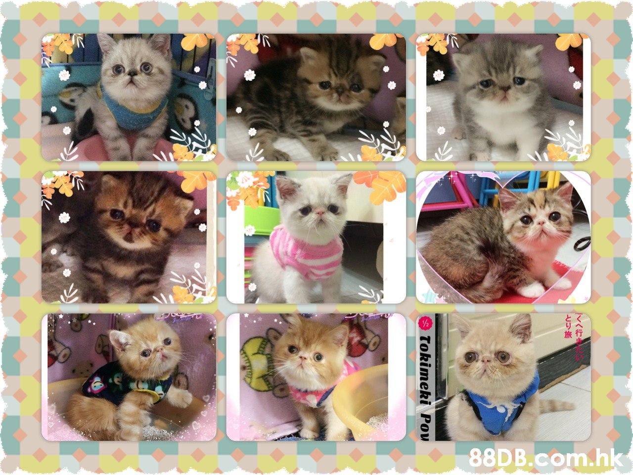 旅行 .hk Tokimeki Pov  Canidae,Puppy,Cat,Collage,Kitten