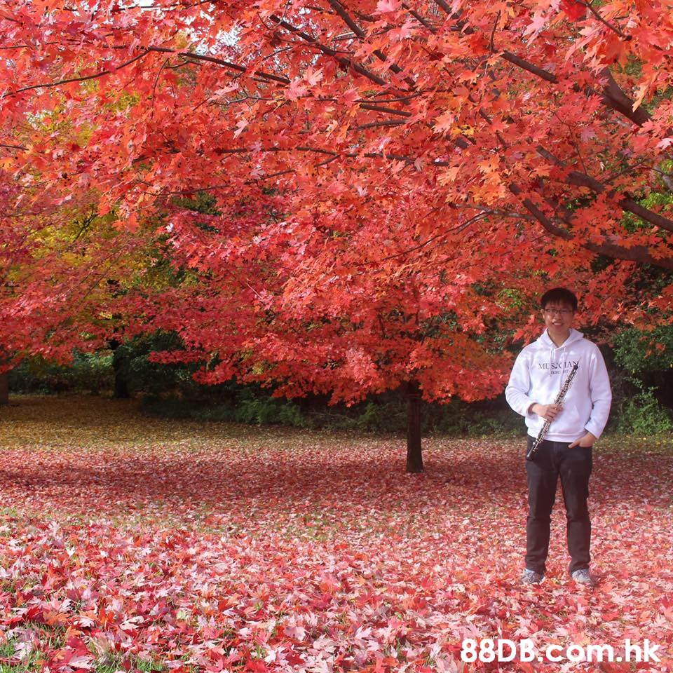 MUSCIAN .hk  Tree,People in nature,Red,Leaf,Autumn