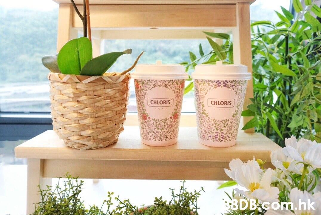 CHLORIS CHLORIS $8DB com.hk  Flowerpot,Houseplant,Plant,Flower,Herb