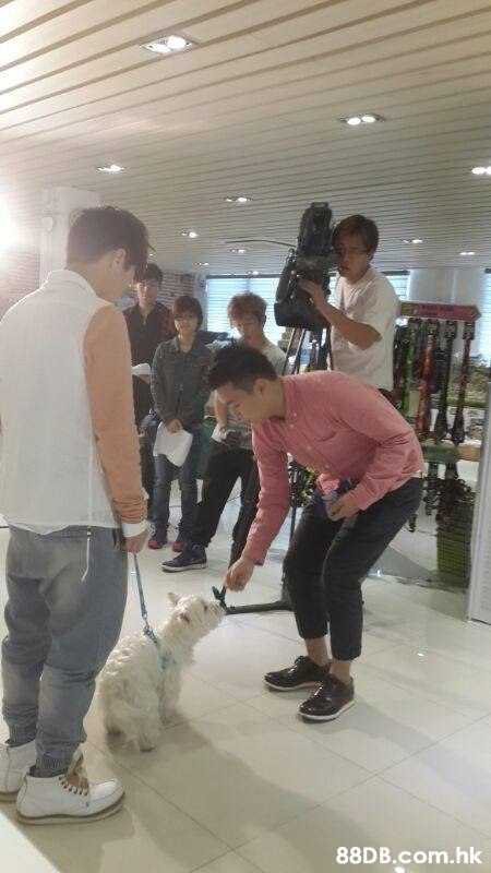 .hk  Canidae,Dog,Companion dog,Non-Sporting Group