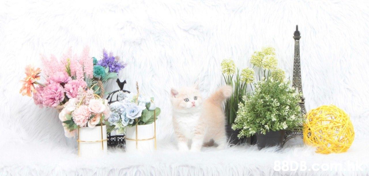 Cat,Felidae,Small to medium-sized cats,Carnivore,Flower
