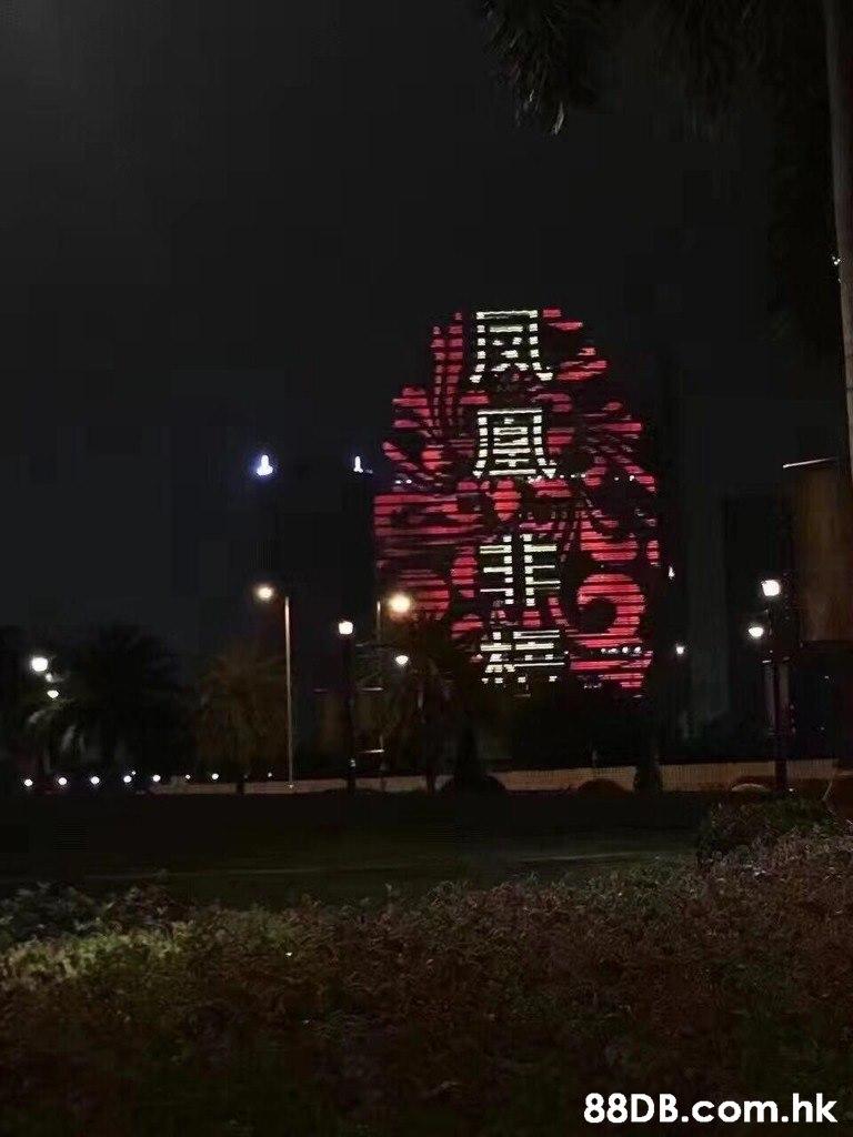 .hk,Night,Tree,Midnight,